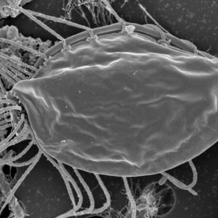 Organisms found on hike in the woods are like no other life on Earth