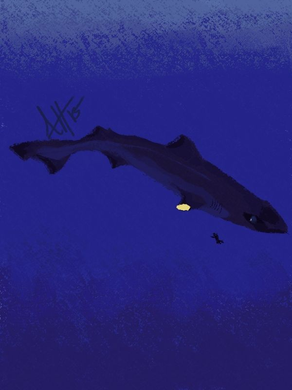 The huge eyes on the Gulper shark fascinated me, and I instantly wanted to paint a giant one.
