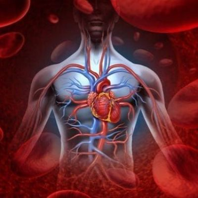 Researchers Identify Molecule With Anti-Aging Effects On Vascular System