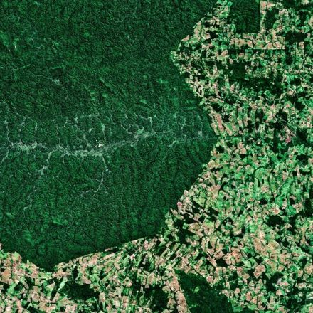 Deforestation in the Amazon is shooting up, but Brazil's president calls the data 'a lie'
