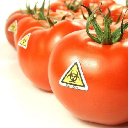 New Level: Monsanto Tries Patenting Natural Tomatoes