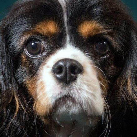 A stealthy Harvard startup wants to reverse aging in dogs, and humans could be next