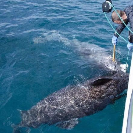 Scientists catch 'ancient' shark believed to be up to 512 years old