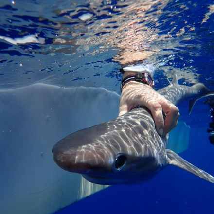 New shark species discovered in the Atlantic Ocean had ancestors older than dinosaurs
