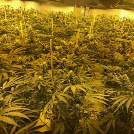 Three men jailed for turning nuclear bunker into £2m-a-year cannabis factory