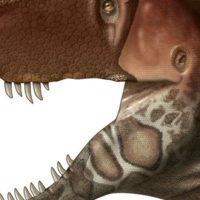 For the first time, we know what Tyrannosaur faces really looked like