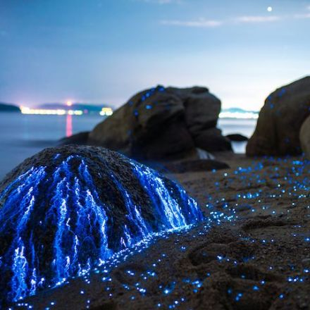 These Rocks Aren't Covered with Glow Stick Liquid, Just Bioluminescent Shrimp