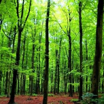 Trees talk to each other and recognize their offspring
