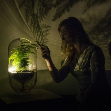 This Dutch startup turns plants into batteries.