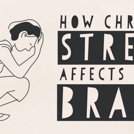 How stress affects your brain.