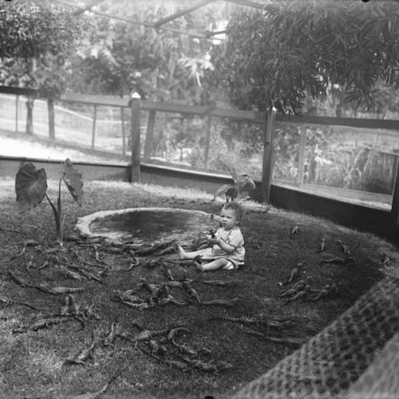 Vintage photos from the heyday of alligator farms.