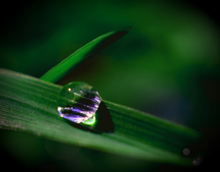 dew drop reflects the late afternoon light on a blade of grass, in the meadow down the edge of the creek by our place. Rotorua, NZ