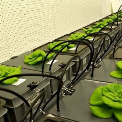 Artificial Soil Made from Lava Rock Allows Growing of Food in Space