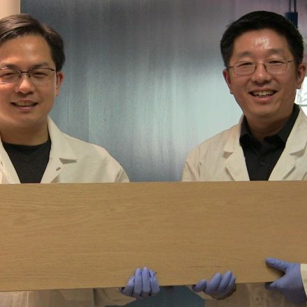 New process could make wood as strong as titanium alloys but lighter and cheaper