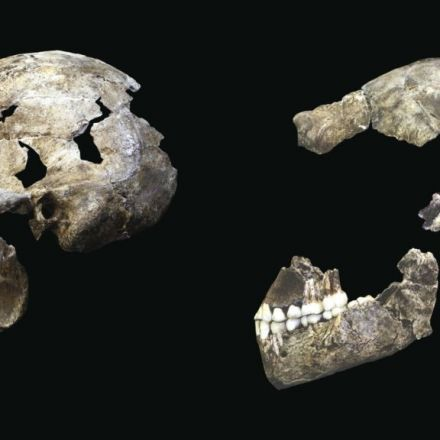 Amazing haul of ancient human finds unveiled