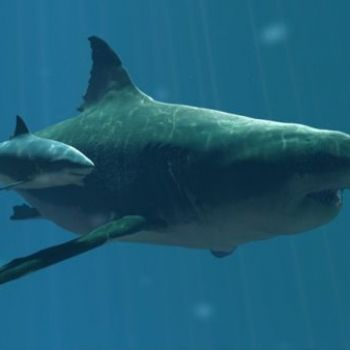 Why did a 60-foot long shark go extinct?