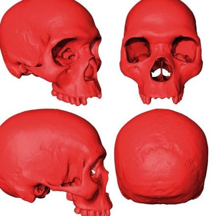 Scientists Find the Skull of Humanity's Ancestor, on a Computer