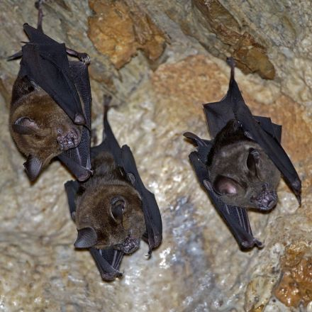 Scientists trace 2002 Sars virus to colony of cave-dwelling bats in China