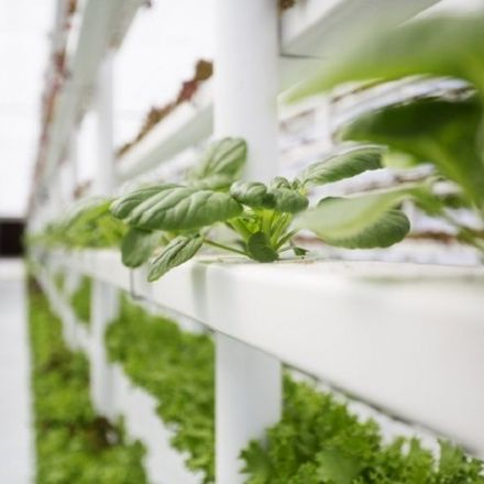 Vertical farming: A sustainable solution to food insecurity?