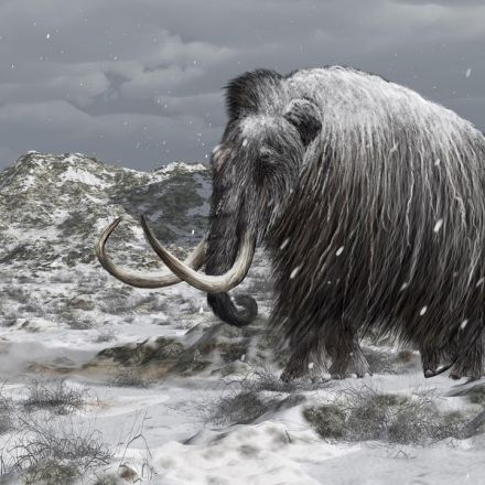 Can Bringing Back Mammoths Help Stop Climate Change?