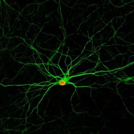 Converting cells into new neurons could lead to a pill that repairs brain damage