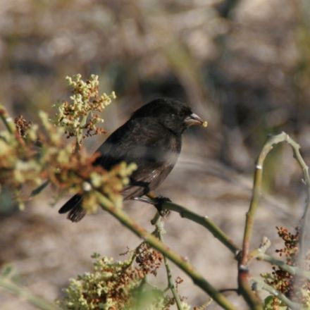 Bird gets lost at sea, accidentally spawns an entire new species on a remote island