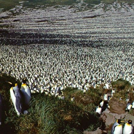 Enormous penguin population crashes by almost 90%