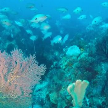 New seabed discovery rivals Great Barrier Reef