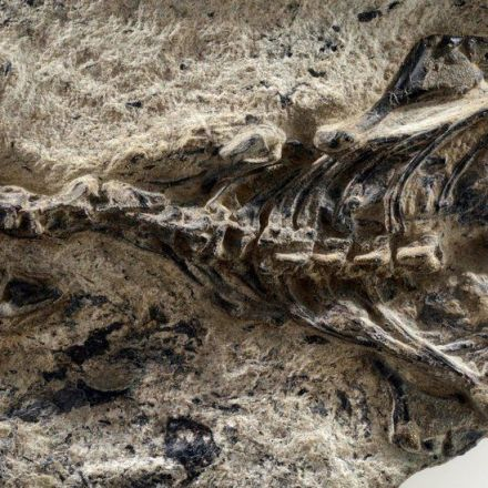 A Mysterious Fossil Points to the Origins of Lizards and Snakes