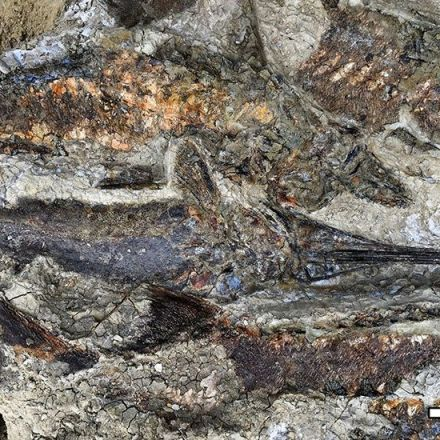 66 million-year-old deathbed linked to dinosaur-killing meteor