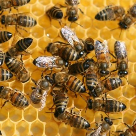 A Molecule in Bees' Royal Jelly Promotes Wound Healing
