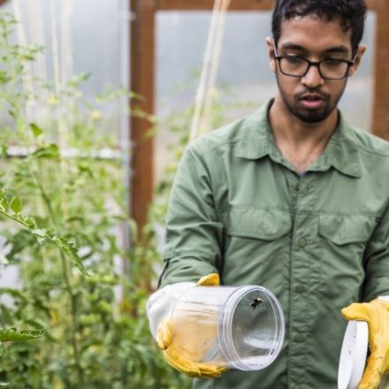 Swarms of bionic bees could monitor farms with electronic backpacks