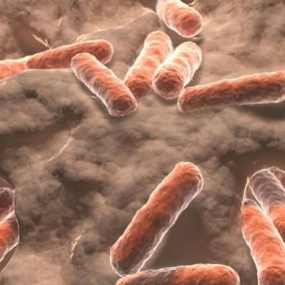 Global warming linked with rising antibiotic resistance