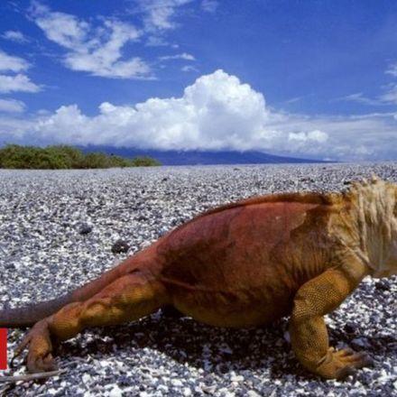 Galapagos fireworks ban to save wildlife