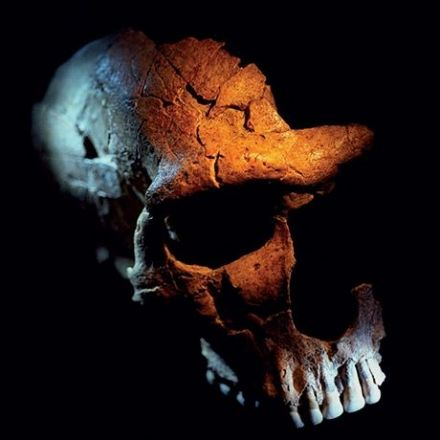Neandertals probably lived a much less violent- life's than modern humans which their skull damage suggests