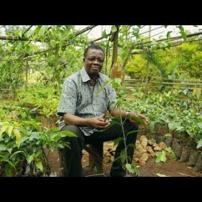 Growing Trees Is Helping Fight Poverty in Cameroon