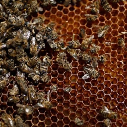 Canada to phase out pesticides linked to bee deaths, sources say