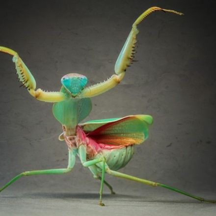 'Spectacular' finding: New 3D vision discovered in praying mantis