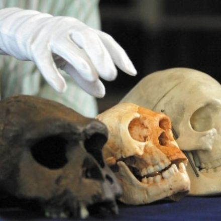 Human evolution: Small remains still pose big problems