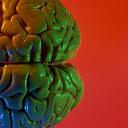 The brain of a lifelong bully looks different than the general population