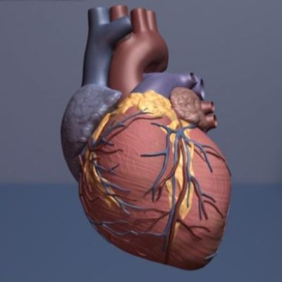 Popular class of drugs reverse potentially harmful genetic changes from heart disease