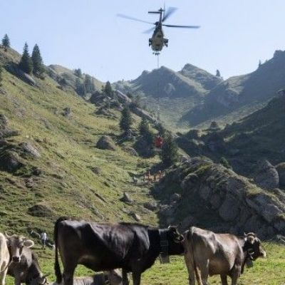 It's so hot in Switzerland that helicopters are airlifting water to thirsty cows