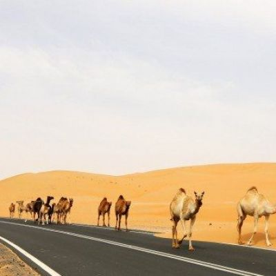 How Chinese scientists plan to turn Dubai into rice fields