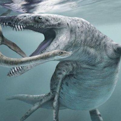 Evolution 'favours big sea beasts'