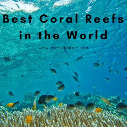 The Best Coral Reefs in the World