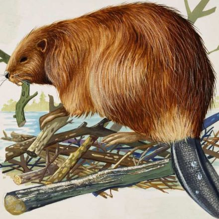 A History of Flavoring Food With Beaver Butt Juice