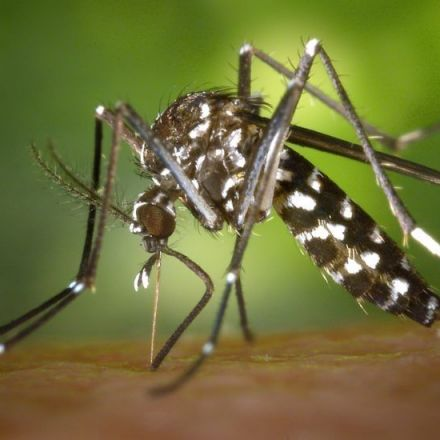 How climate change will put billions more at risk of mosquito-borne diseases