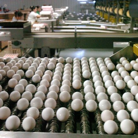 Egg Company Reports $74M Loss Due to Vegan Alternatives
