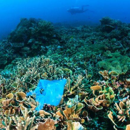UN signals 'end' of throwaway plastic