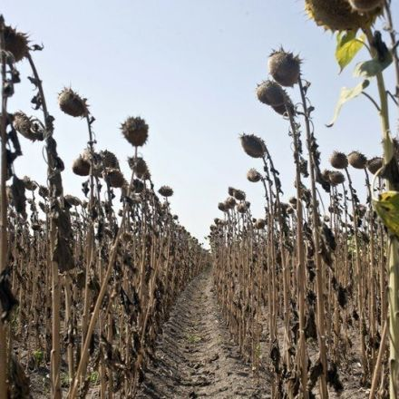 Extreme heat in Europe decimating crops and stoking drought